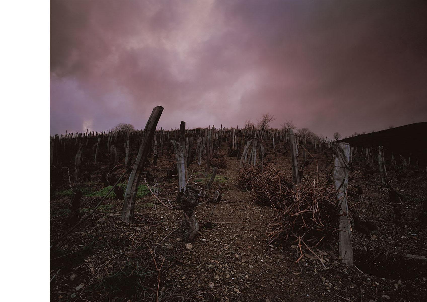 El vino de Cangas 11