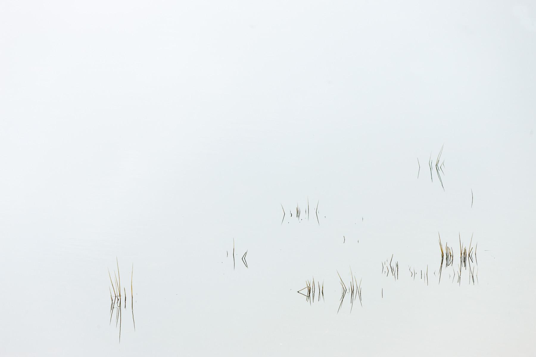 Lac de Vassiviere detail 03