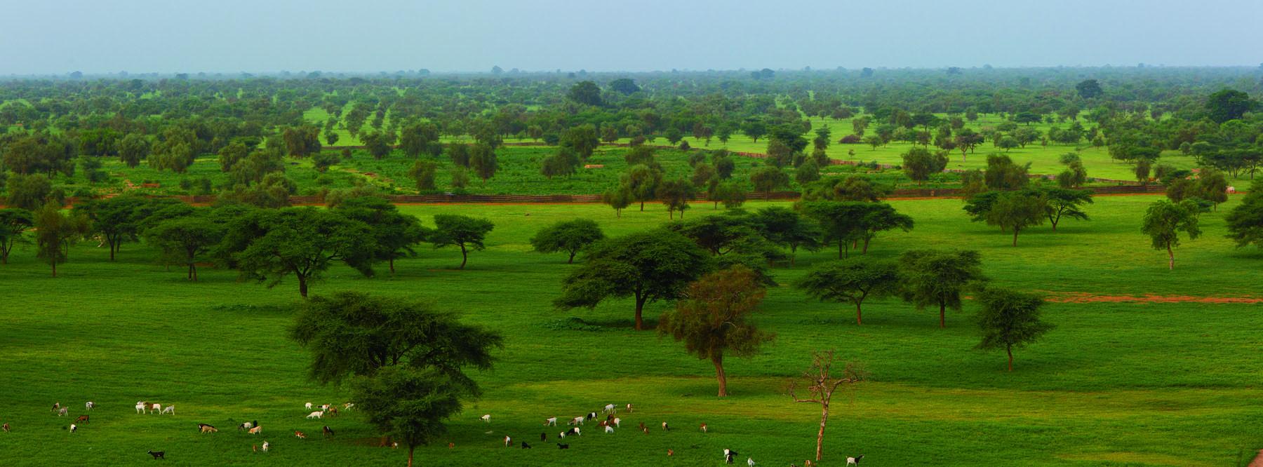 Panorama jardins