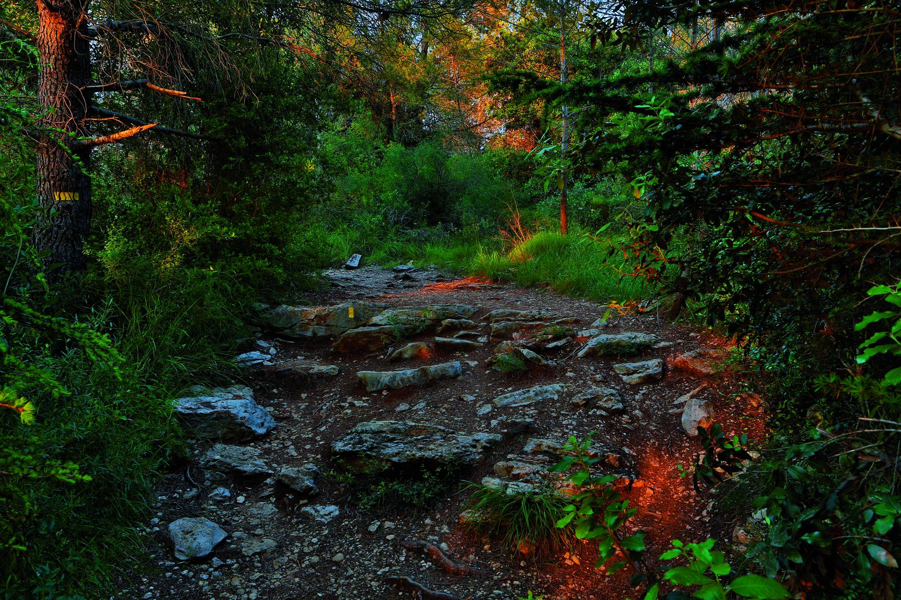 Parc Forestier de La Brague5